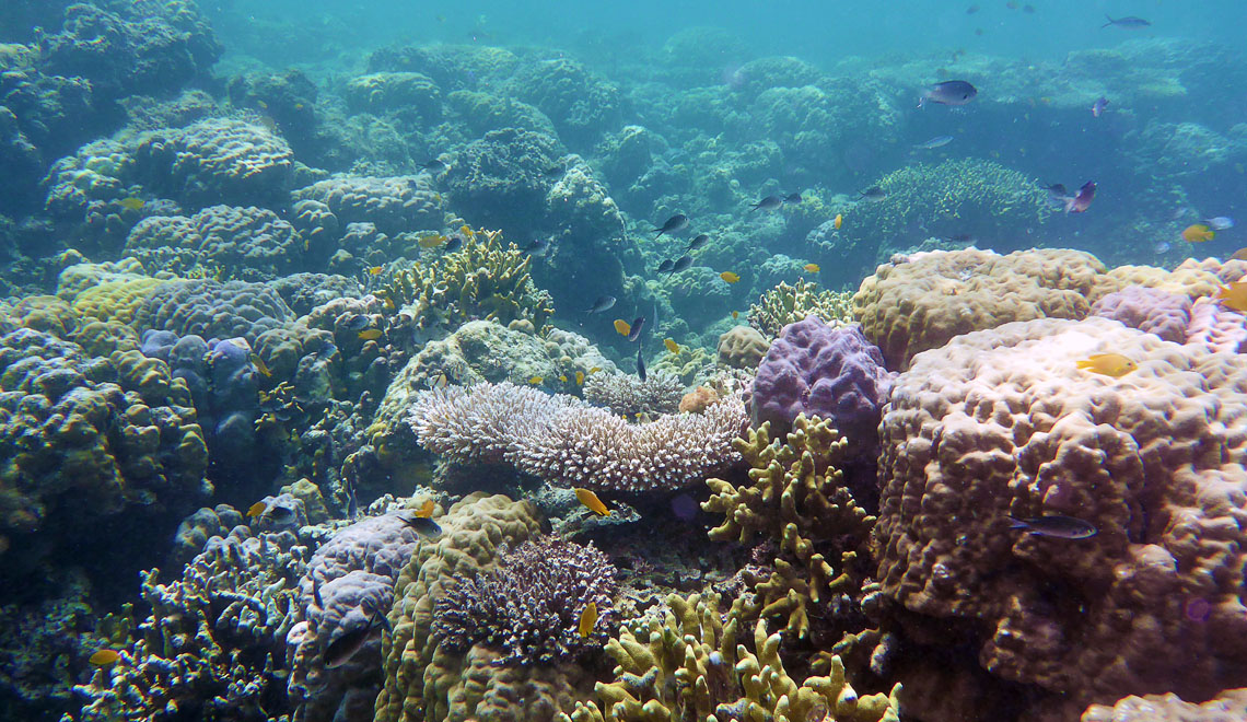 house-reef-1140x640px